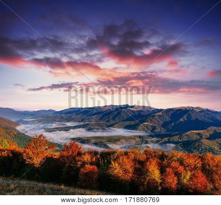 View of misty fog mountains in autumn, Carpathians. Ukraine. Europe