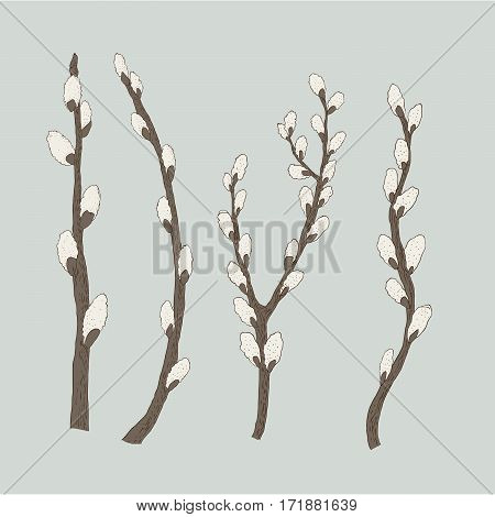Pussy willow branches with catkins vector illustration