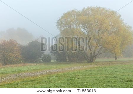 Fall shot simple and moody of just grass and trees with the fog shrouding the background.