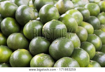 Green orange background. Close-up lime pile on table. Green ripe lime with glossy surface backdrop. Fresh summer wallpaper. Philippines kalamanchi exotic fruit. Tropical garden harvesting. Lime skin