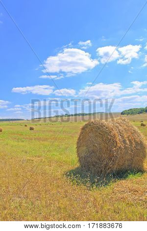In a height a summer on the fields collect a hay stopping behind after harvesting. He is laid in the exact fellings.