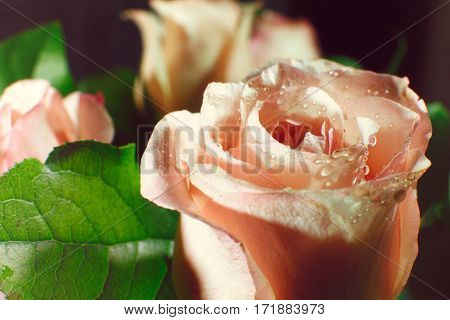 Wet Pink Rose Bud With Drops Of Water Flowing Down