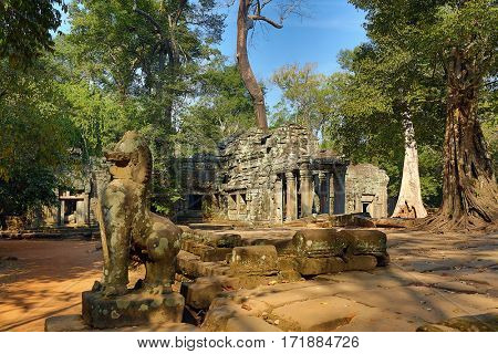 Ta Prohm temple in Angkor Wat (Siem Reap, Cambodia)
