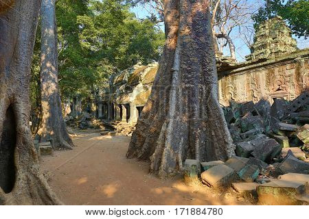 Giant trees and the ruin of Ta Prohm temple in Angkor Wat (Siem Reap, Cambodia)