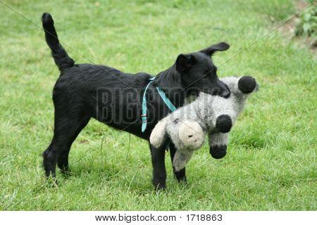Playing Pet