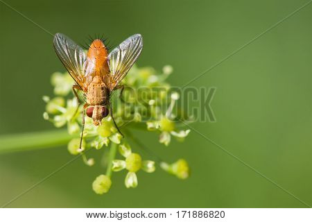Macro view brown fly on greenery yellow flower. Selective focus, shallow depth of field photo
