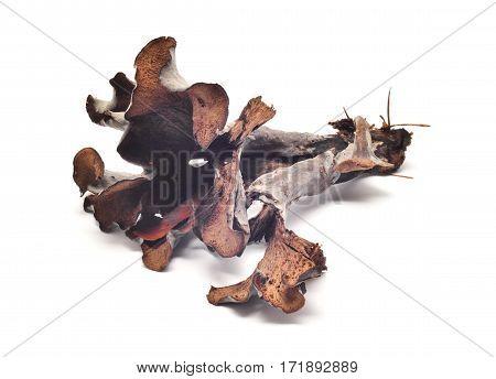 craterellus cinereus mushroom isolated on white background