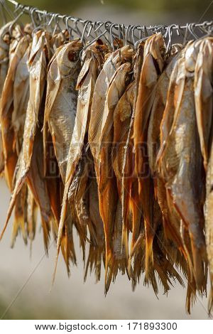 dried fish hanging on the clothesline on a sunny day, close-up