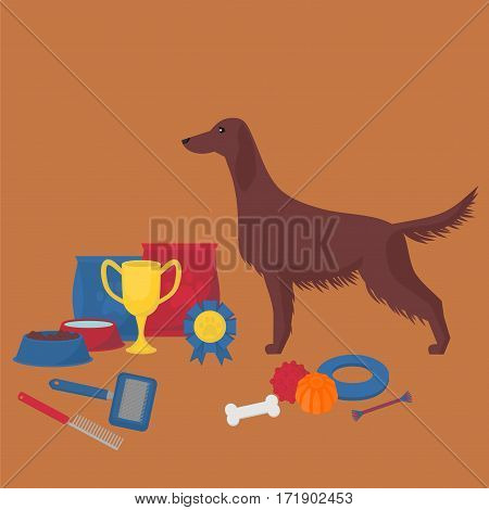 Irish setter with dog items. Pet care elements for grooming, walking and feeding