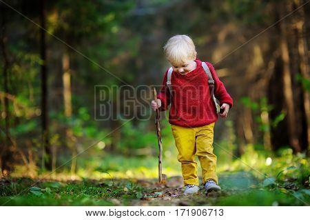 Little Boy Walking In Forest
