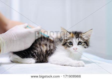 Veterinary Doctor Giving Injection For Kitten