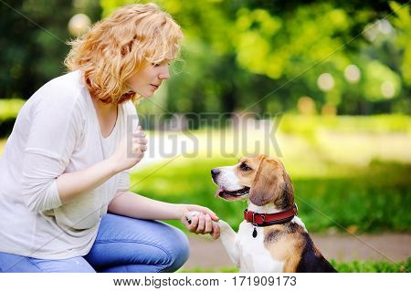 Obedient Beagle Dog With His Owner Practicing Paw Command