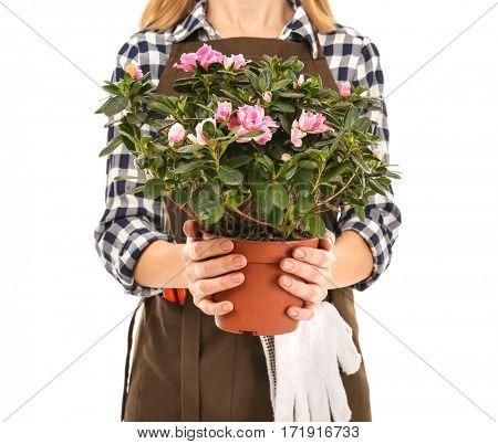 Female florist holding house plant isolated on white background