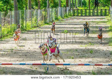 dog race moment - finish for monkey riding dogs