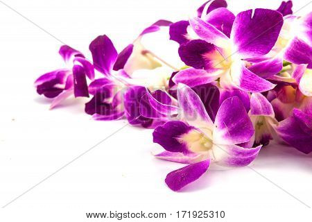 The beautiful dendrobium orchid on white background