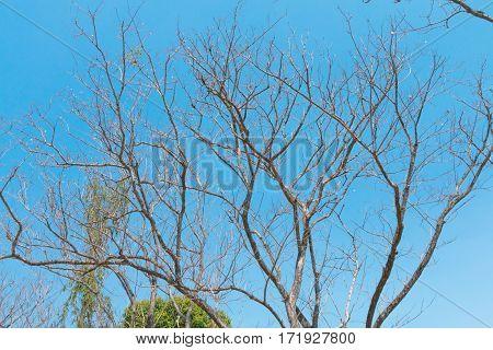 a barren tree landscape of sky, environment concept.