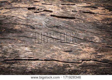The dark wood texture. pattern wood background.