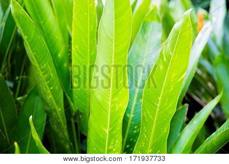 Abstract background with green shiny palm leaves