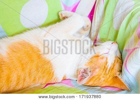 A sleeping cat over a blanket velvety