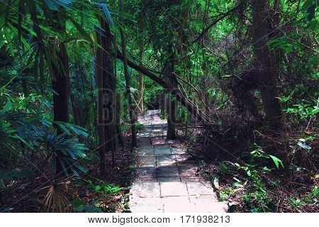 Thailand koh rok island. Path through the jungle to the top of the island