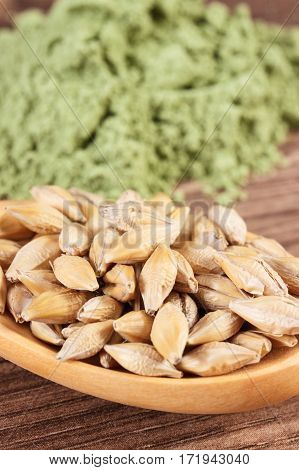 Closeup Of Barley Grain On Spoon And Young Powder Barley In Background, Body Detox