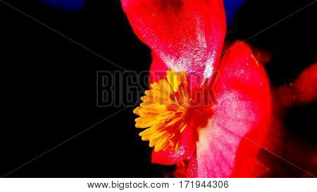Red and yellow flower against a bock background