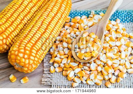 corn seed or maize corn seed pile in spoon wooden on brown sack on table wooden