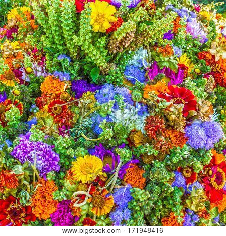 multicolor summer flowers natural background, green nature