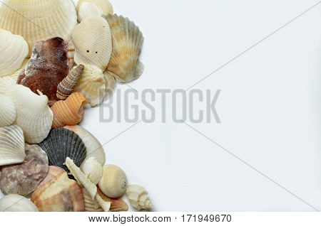 Sea shells scraped together isolated on white background