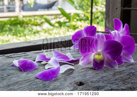 Beautiful Dendrobium Orchid On Table