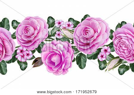 Horizontal seamless border. Floral background. Garlands of flowers pink roses camellias. Old vintage style. Isolated on white background.