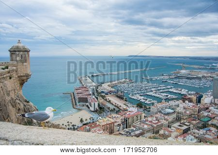 A seagull near the ancient castle Santa Barbara above the port of Alicante and a view to Mediterranean sea Spain.