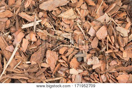 Chips Of Pine Bark Background