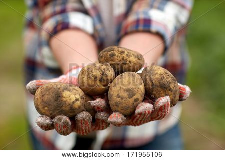 farming, gardening, agriculture and people concept - farmer holding potatoes at farm