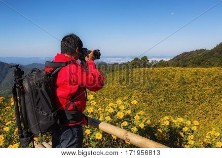 Photographer take a photo for The road to the field of yellow Mexican Sunflower Weed on the mountainMae Hong Son ProvinceThailand. pang ung pinging Chiang Mai pai flower