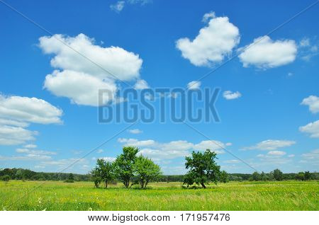 Climate Change and Global Warming. Meadow landscape. Beautiful Trees and flowers meadow with meadow salsify cloudscape. Meadow with flowers.