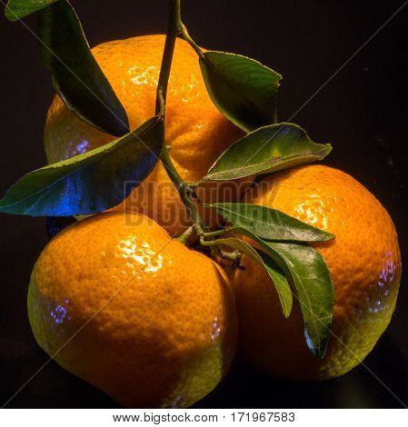 The three mandarins on blackbackground. Square shape