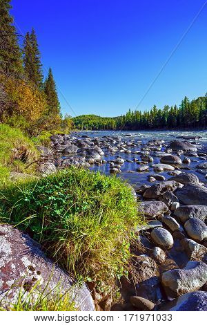 Mountain river in the Altai among the bushes and trees. Flowing over round stones.
