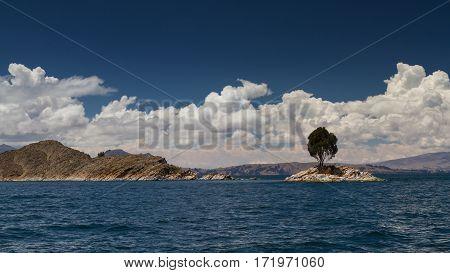 Tree on a small island at Lake Titicaca Bolivia