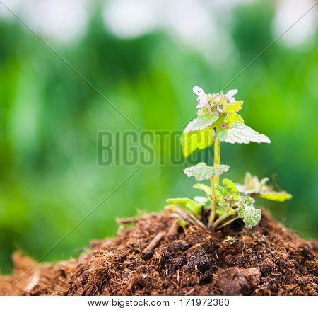 Young Plant Growing On Dry Soil With Green Background Under The Sunlight. Earth Day Concept