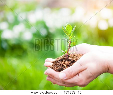 Female Hands Holding Young Plant In Hands Against Spring Green Background. Ecology Concept. Earth Da
