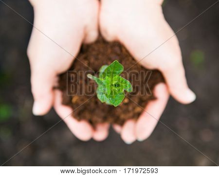 Female Hands Keeping Young Plant Against The Soil. Ecology Concept. Earth Day