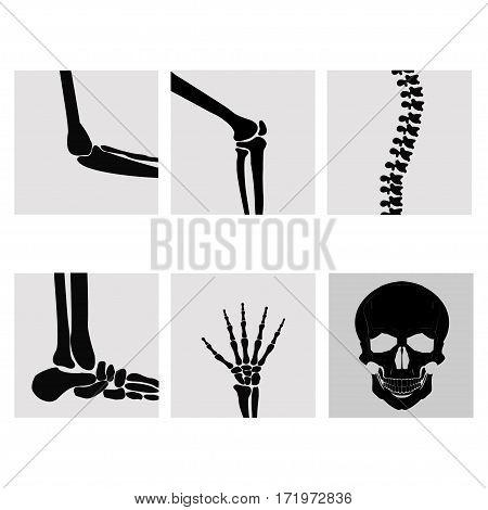 Human joints, knee, elbow, ankle, wrist hand . Medical orthopedic of set. Anatomy orthopedic illustration icon leg and bone skull spine