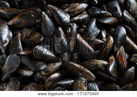 Fresh Mussels ready to cook as background