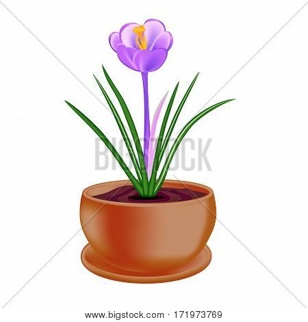 Spring flower in a flowerpot on white background. Raster version.