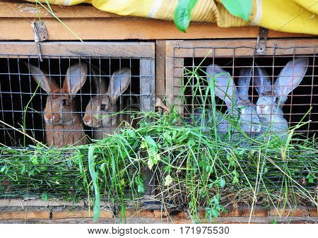 Feeding Rabbits. Rabbits eat green grass. Rabbit cage.