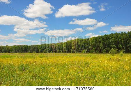 Meadow landscape. Beautiful flower meadow with meadow salsify cloudscape. Meadow with flowers.