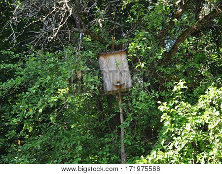 Wooden trap for wild bees or for Swarming bees. How to Capture a Swarm and Install it in a Beehive.