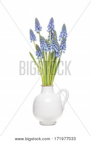 Bouquet of blue grape hyacints in a white vase isolated on a white background