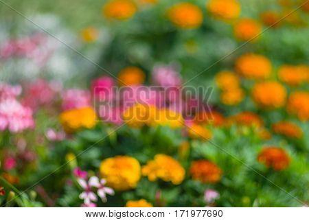 Natural background - blurry flower-bed in a summer garden.
